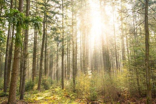 البيئة الحفاظ على الغابات