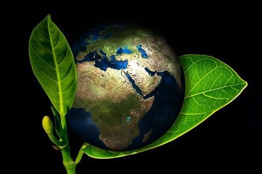 علم البيئة