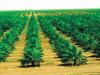 الزراعة في الإمارات بحث شامل