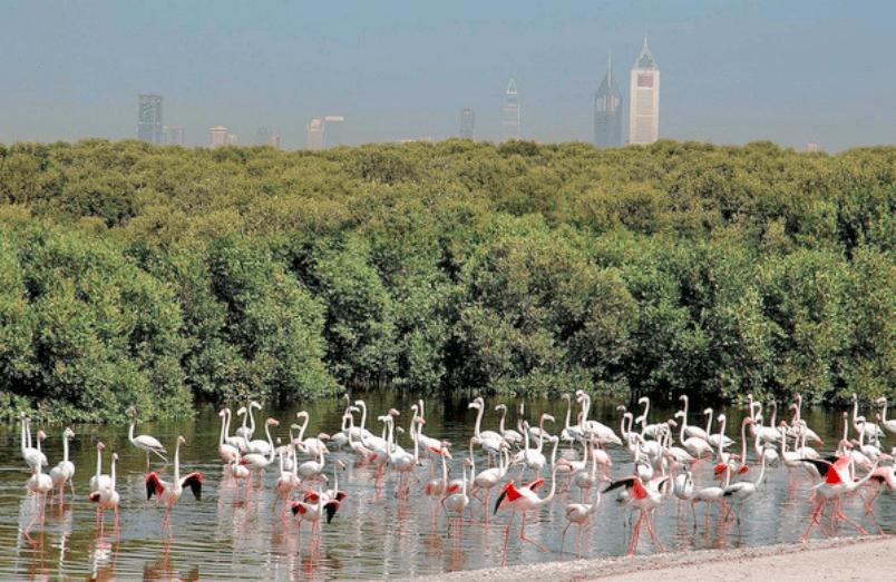 محميات طبيعية في الامارات