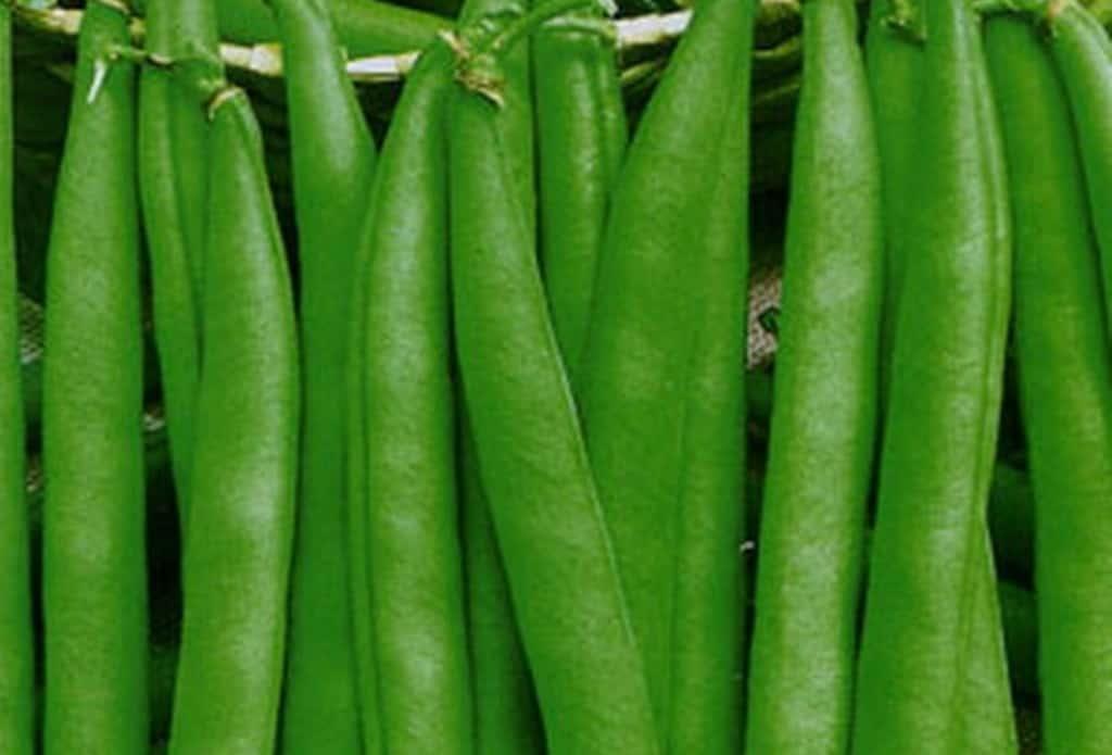 اهم فوائد واضرار الفول الأخضر