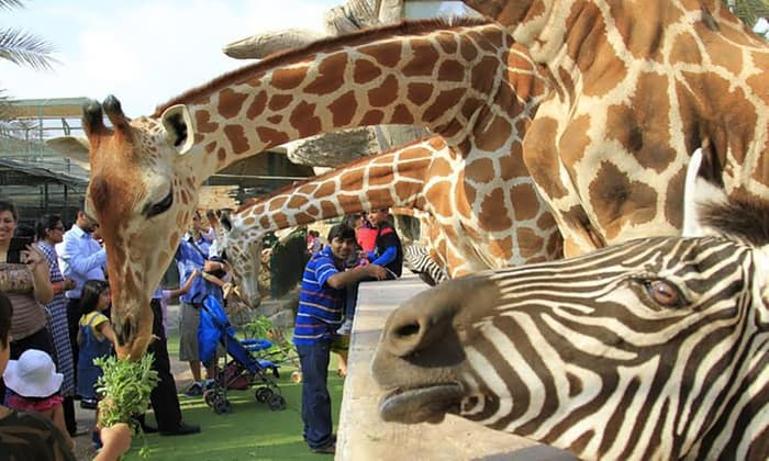 حديقة الامارات للحيوانات موسوعة
