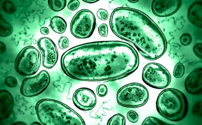 كيف تتخلص البكتيريا العنقودية