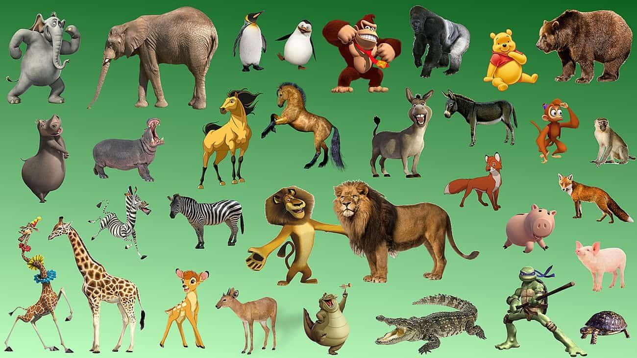 معلومات عامة عن الحيوانات