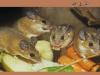 الفأر في الحلم تفسير حلم الفئران