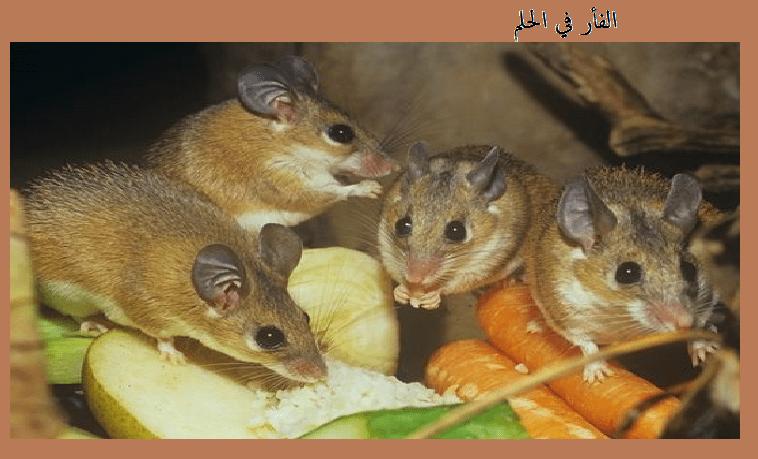 الفأر في الحلم