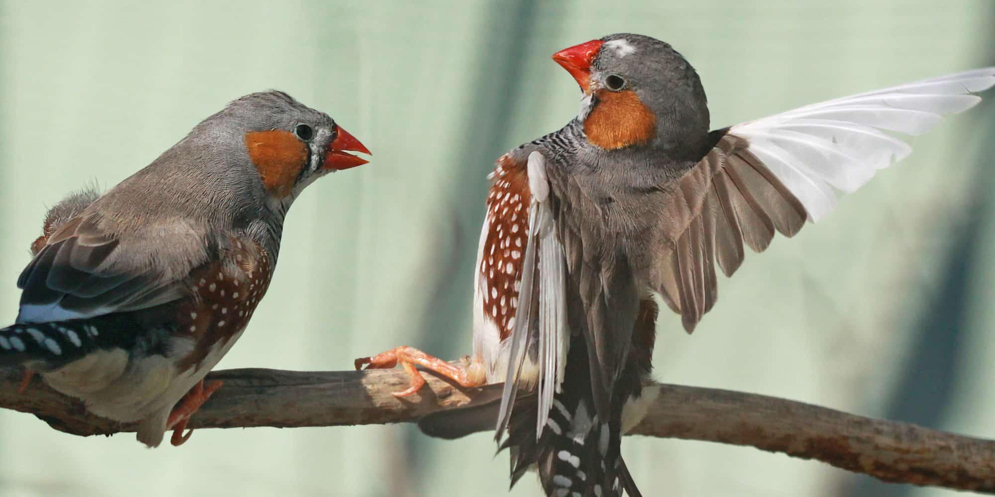 تعبير عن الطيور