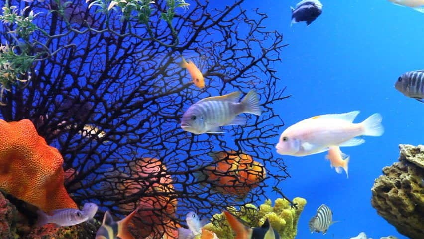 تفسير السمك في الحلم لابن سيرين