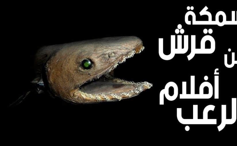 القرش العفريت أو الغول أو الجن مميزاته واين يعيش