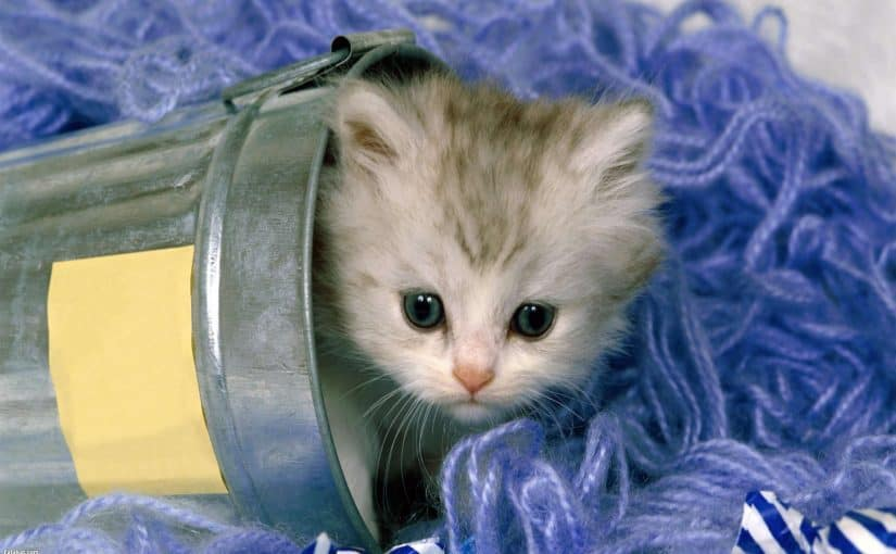 سبب إختباء القطط فى البيوت