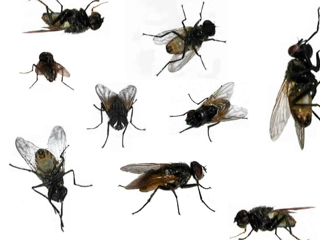 https://cdn.mosoah.com/wp-content/uploads/2017/12/حشرات-صغيره-طائره-في-المنزل.jpg