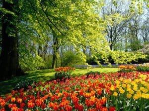 الحدائق الخضراء