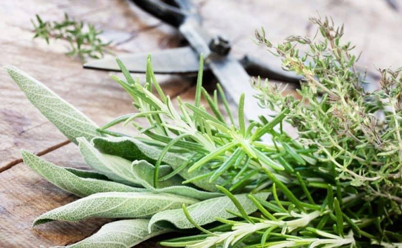 علاج بوصفير الكبد بالأعشاب