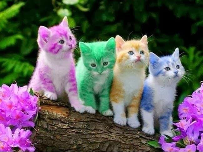 أسماء القطط