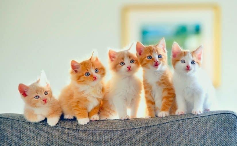 أسماء قطط بنات