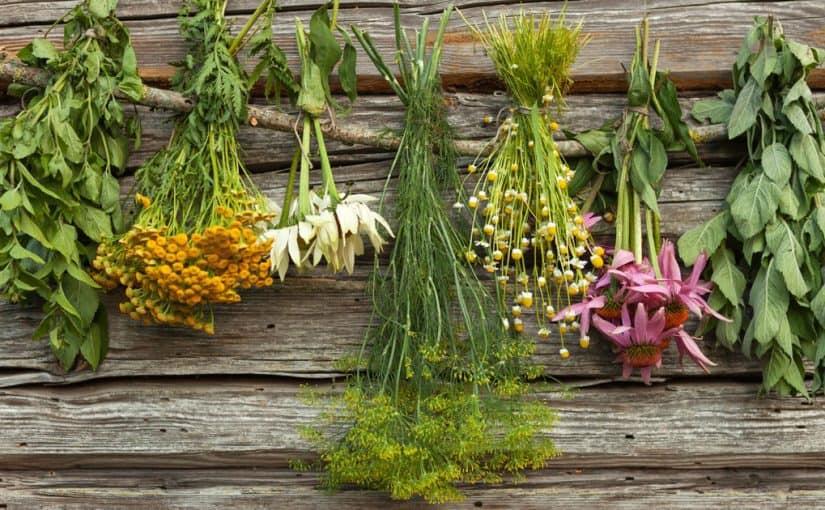 ما هي أعراض جرثومة المعدة وعلاجها بالأعشاب ؟ - موسوعة