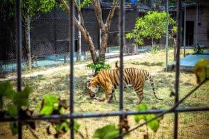 أكواريوم وحديقة النمور