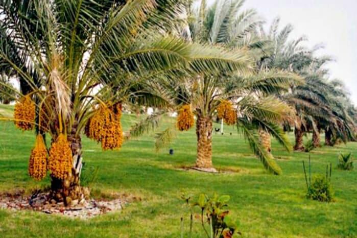 الزراعة في الإمارات العربية المتحدة