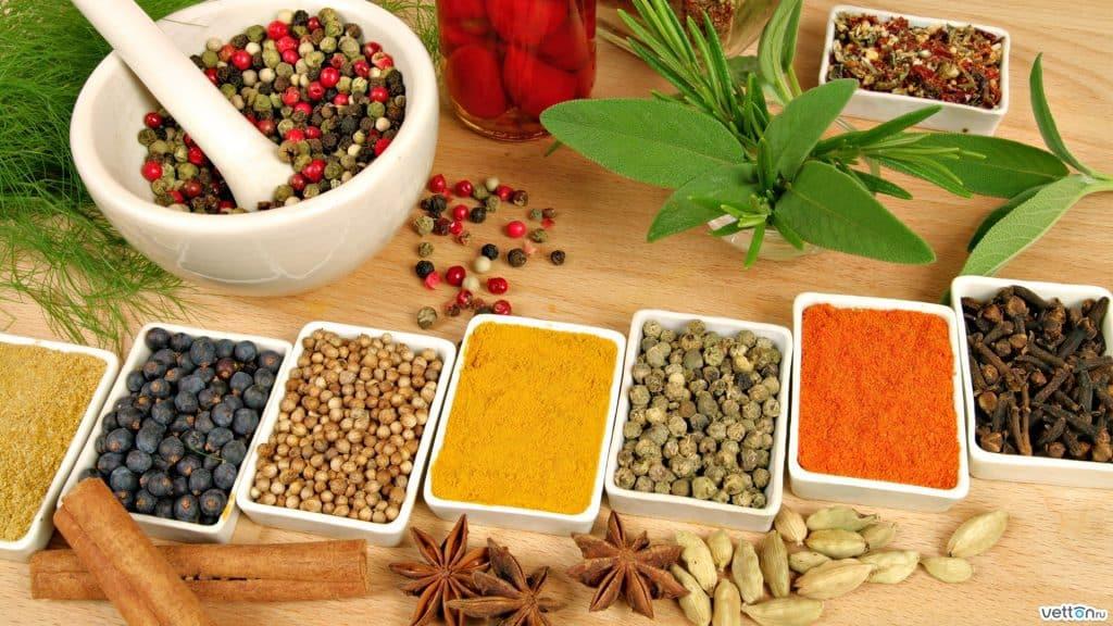 علاج قرحة المعدة بالأعشاب