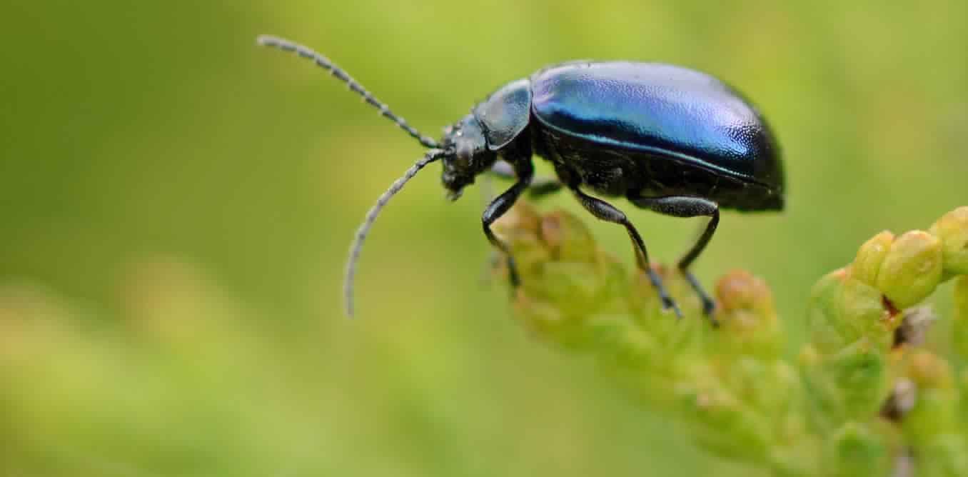 الحشرات السوداء في المنام