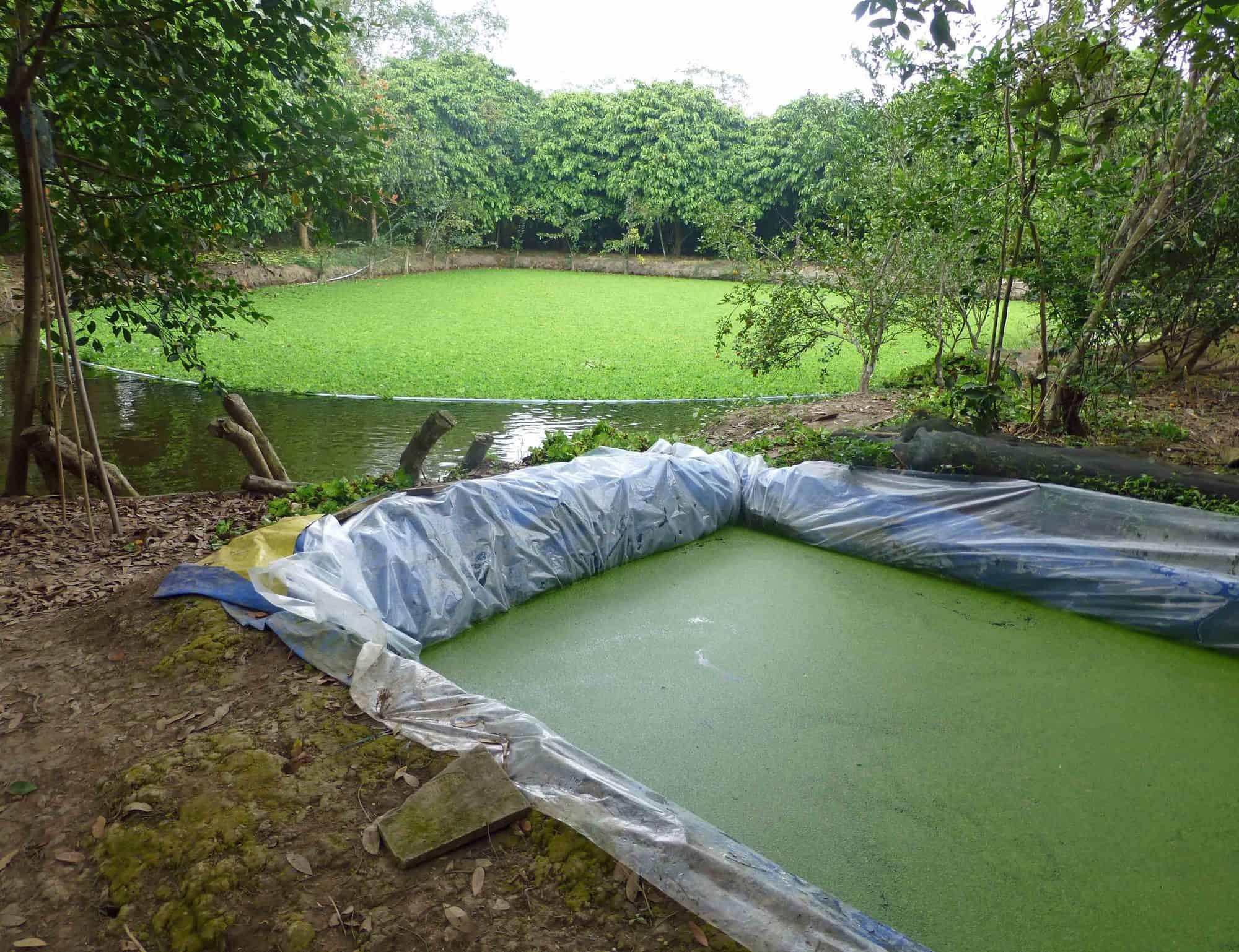 كيفية الزراعة المائية بطريقة سهله وسريعه ؟
