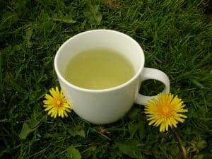 شاي الهندباء