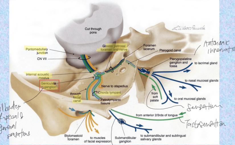 علاج العصب السابع بالقران أسرع طريقة لعلاج التهاب العصب السابع موسوعة