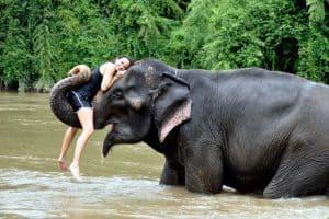 قرية الفيلة في تايلاند