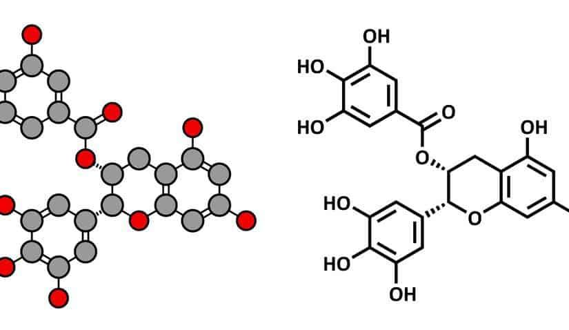 مادة البوليفينول المضادة للأكسدة