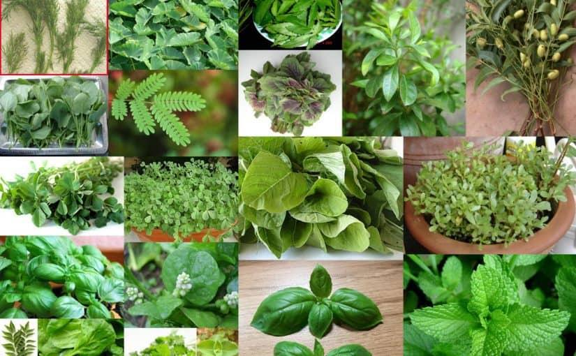 ما هي النباتات العطرية موسوعة