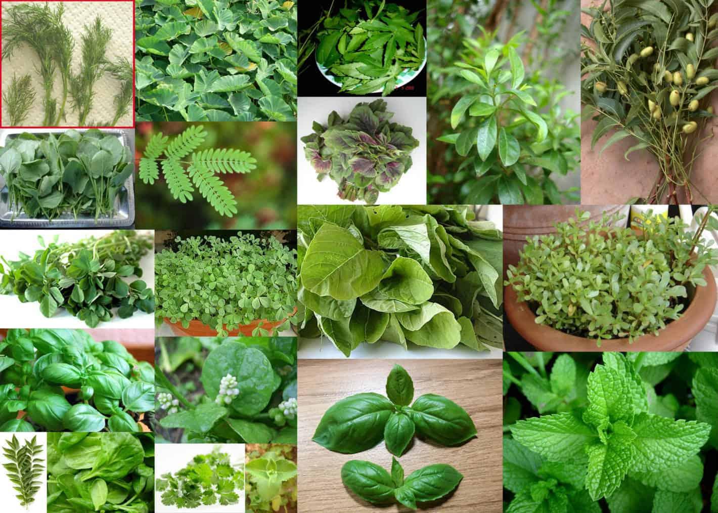 ما هي النباتات العطرية