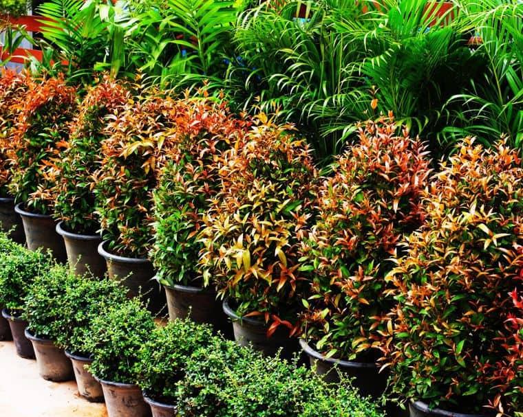 ما هي نباتات الزينة الداخلية