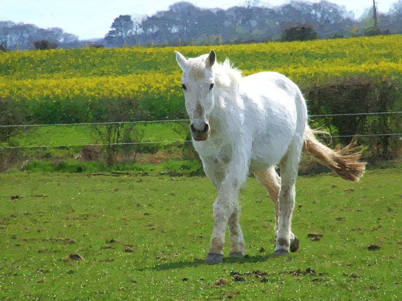 تفسير الحصان الابيض فى الحلم