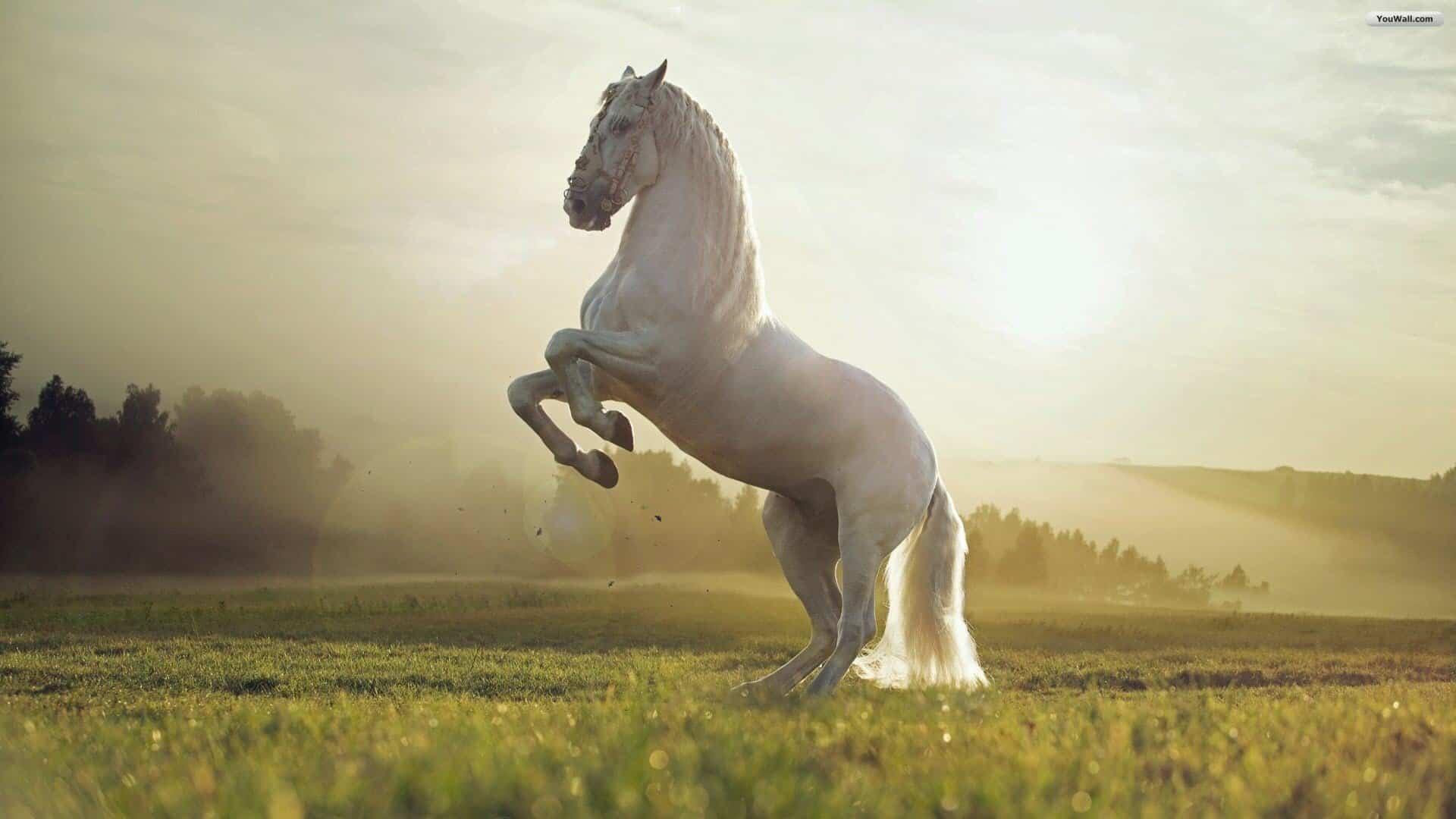 تفسير حلم الحصان