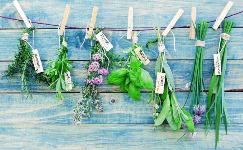علاج قرحة المعدة بالاعشاب مجرب موسوعة