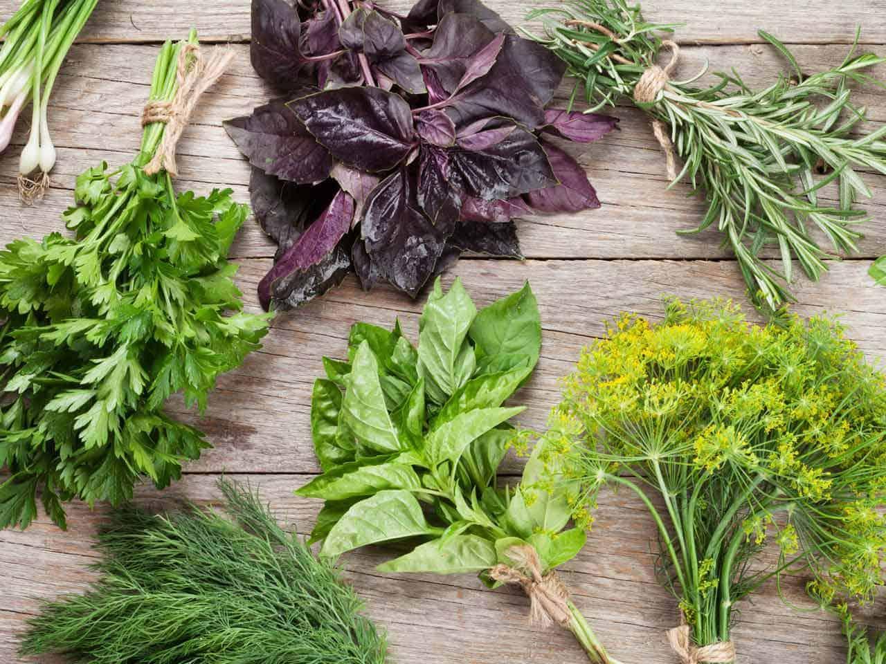 علاج المغص عند الرضع بالأعشاب