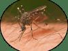 تفسير حلم لدغ الحشرات في المنام