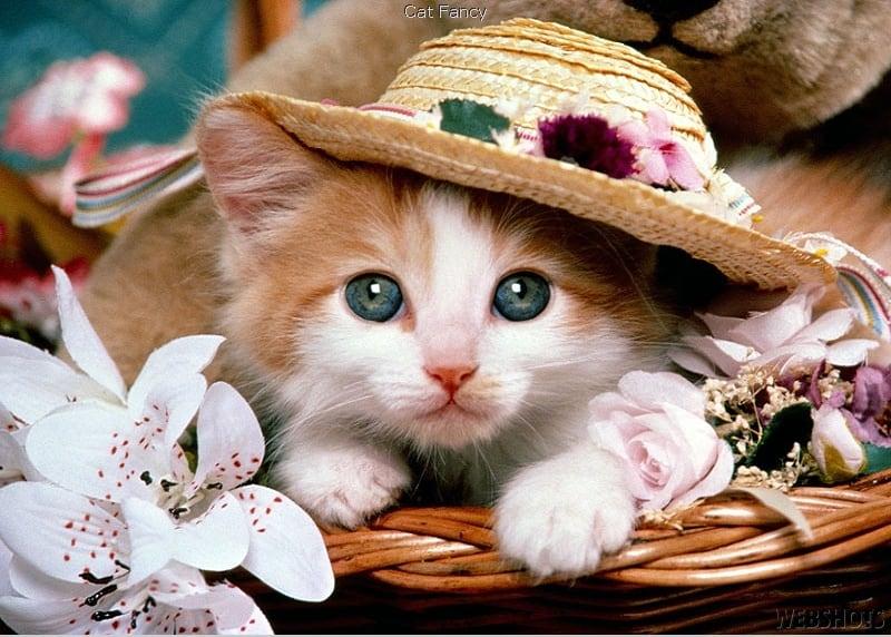 أسماء القطط بالعربية