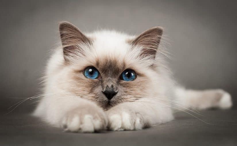 أسماء قطط إناث فرنسية