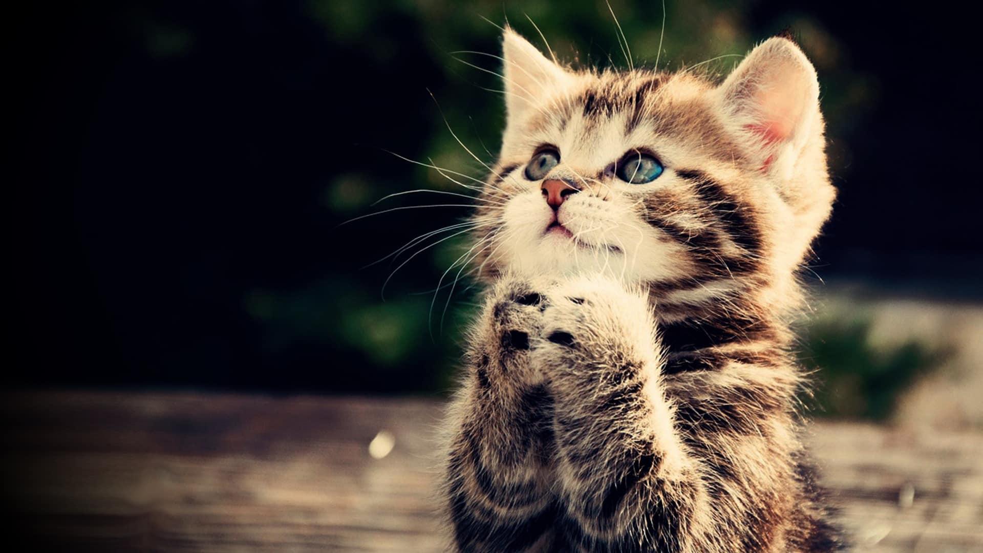 أسماء قطط بنات أجنبية