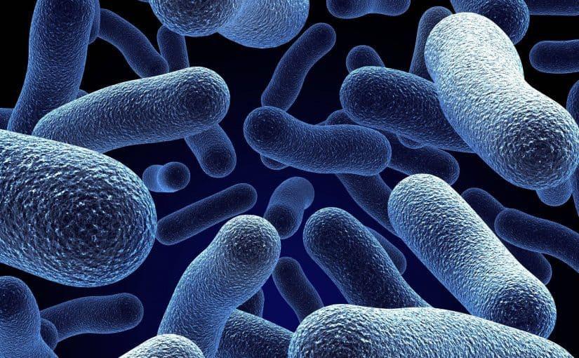 بحث عن البكتريا