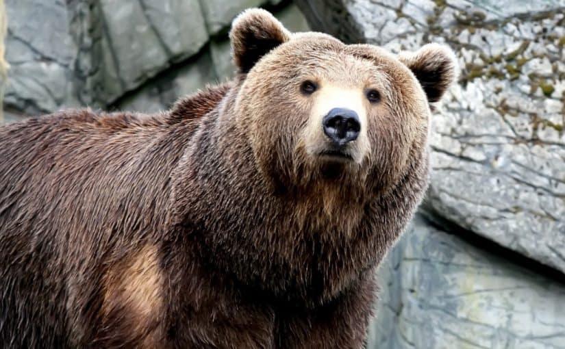 تفسير رؤية الدب في المنام موسوعة
