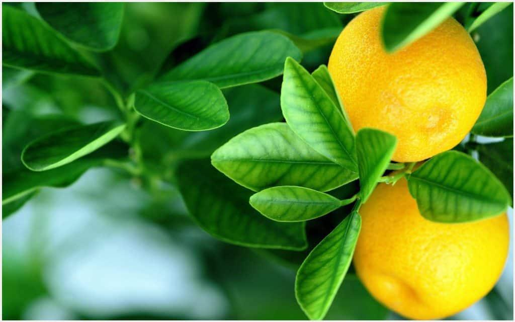 فائدة الليمون للبشرة الدهنية