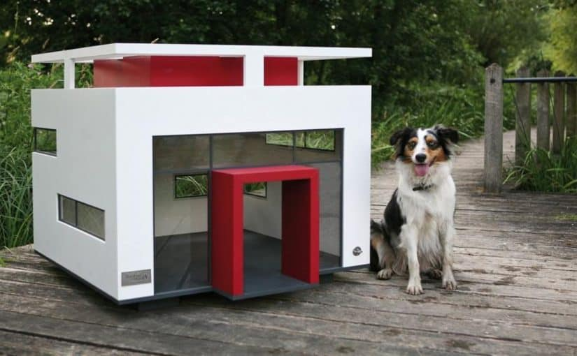 تفسير حلم الكلاب حول البيت