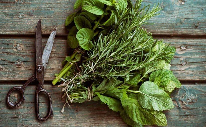 فوائد وتجارب العشبة الخضراء للحمل السريع موسوعة