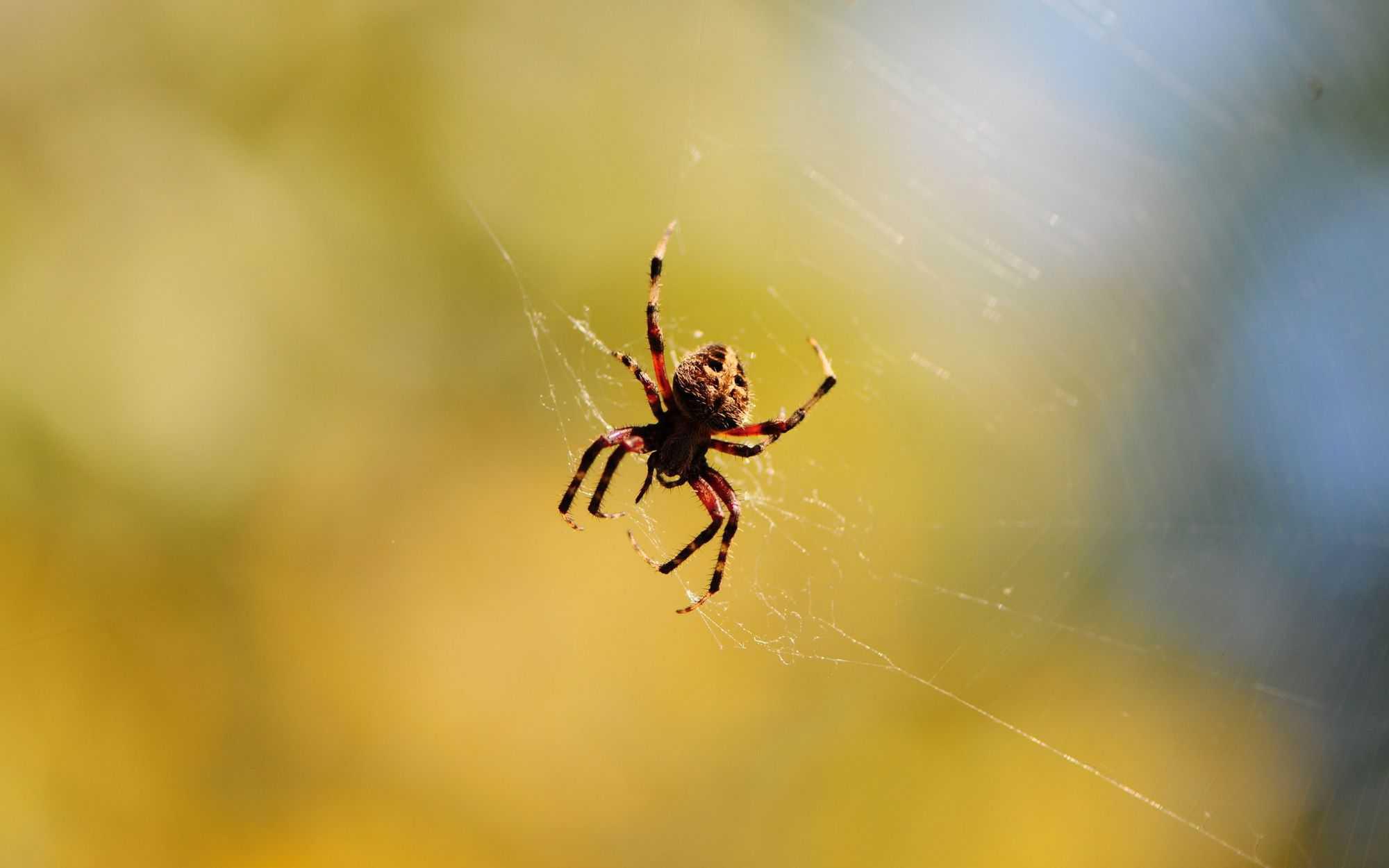تفسير العنكبوت في الحلم