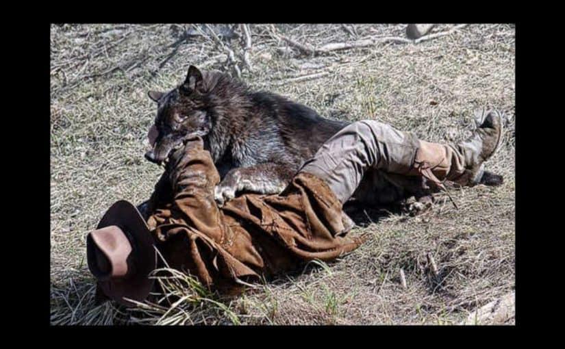 تفسير رؤية ذئب يهاجمني في المنام أسرار تفسير هجوم الذئب في المنام لابن سيرين موسوعة