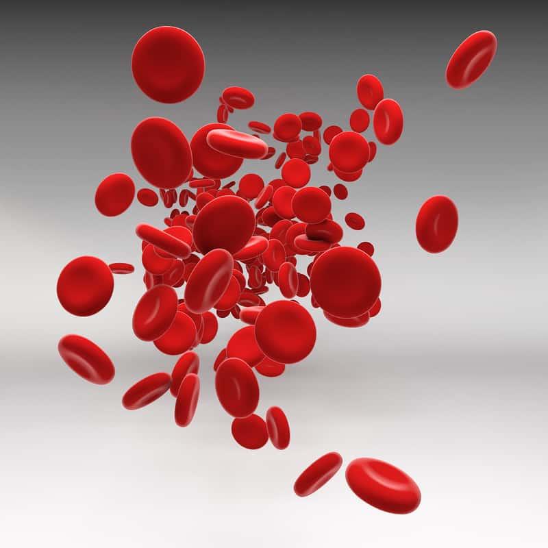 التهاب الدم