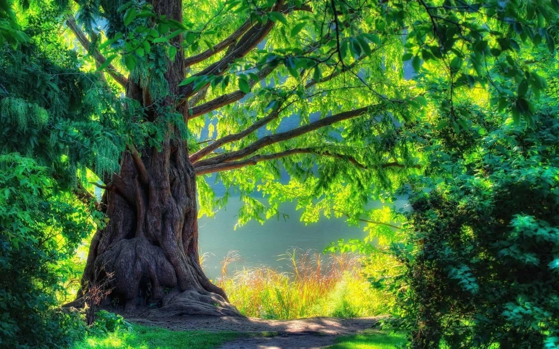 الاشجار دائمة الخضرة