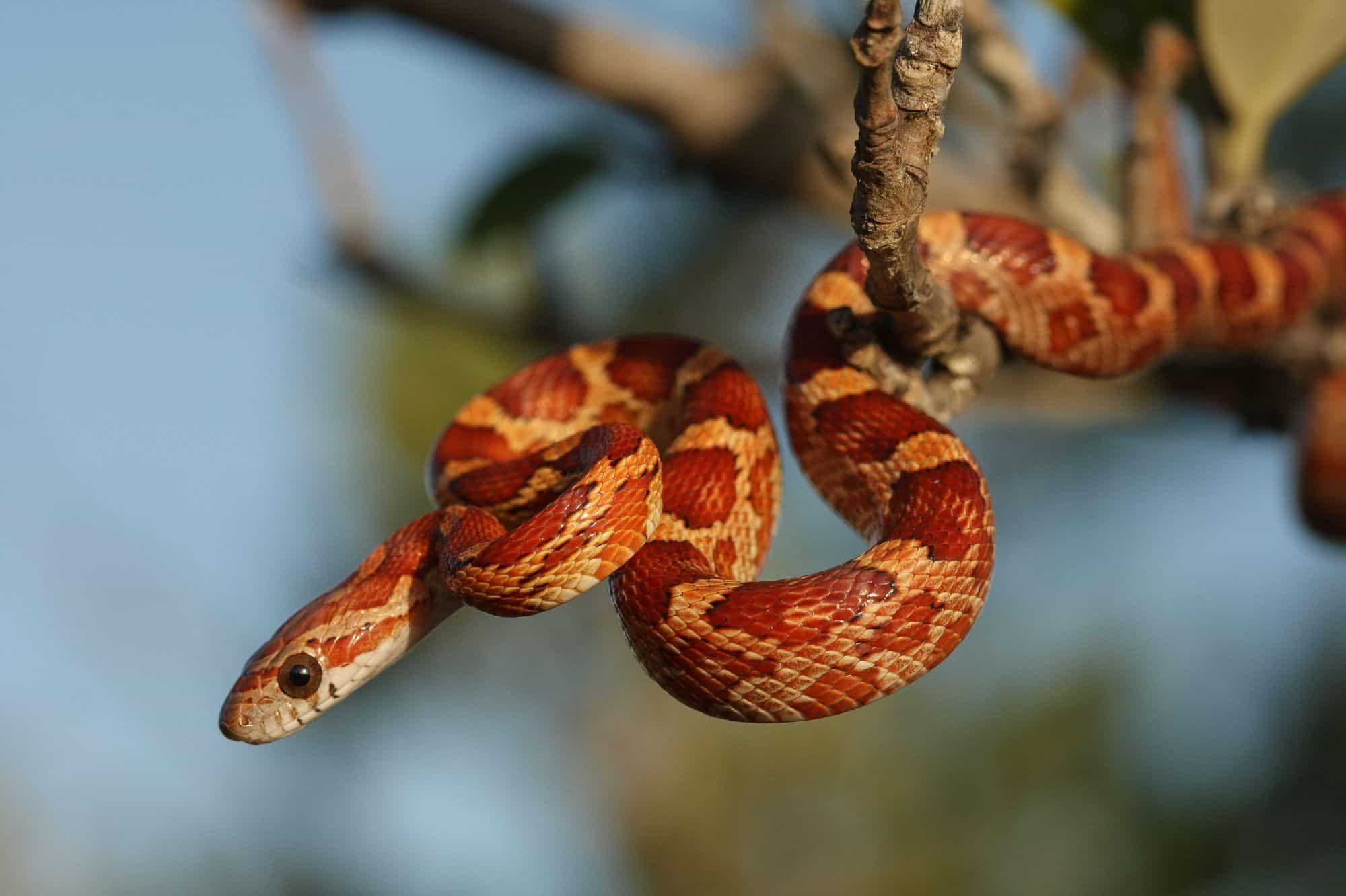 تفسير حلم الثعابين فى الحلم موسوعة